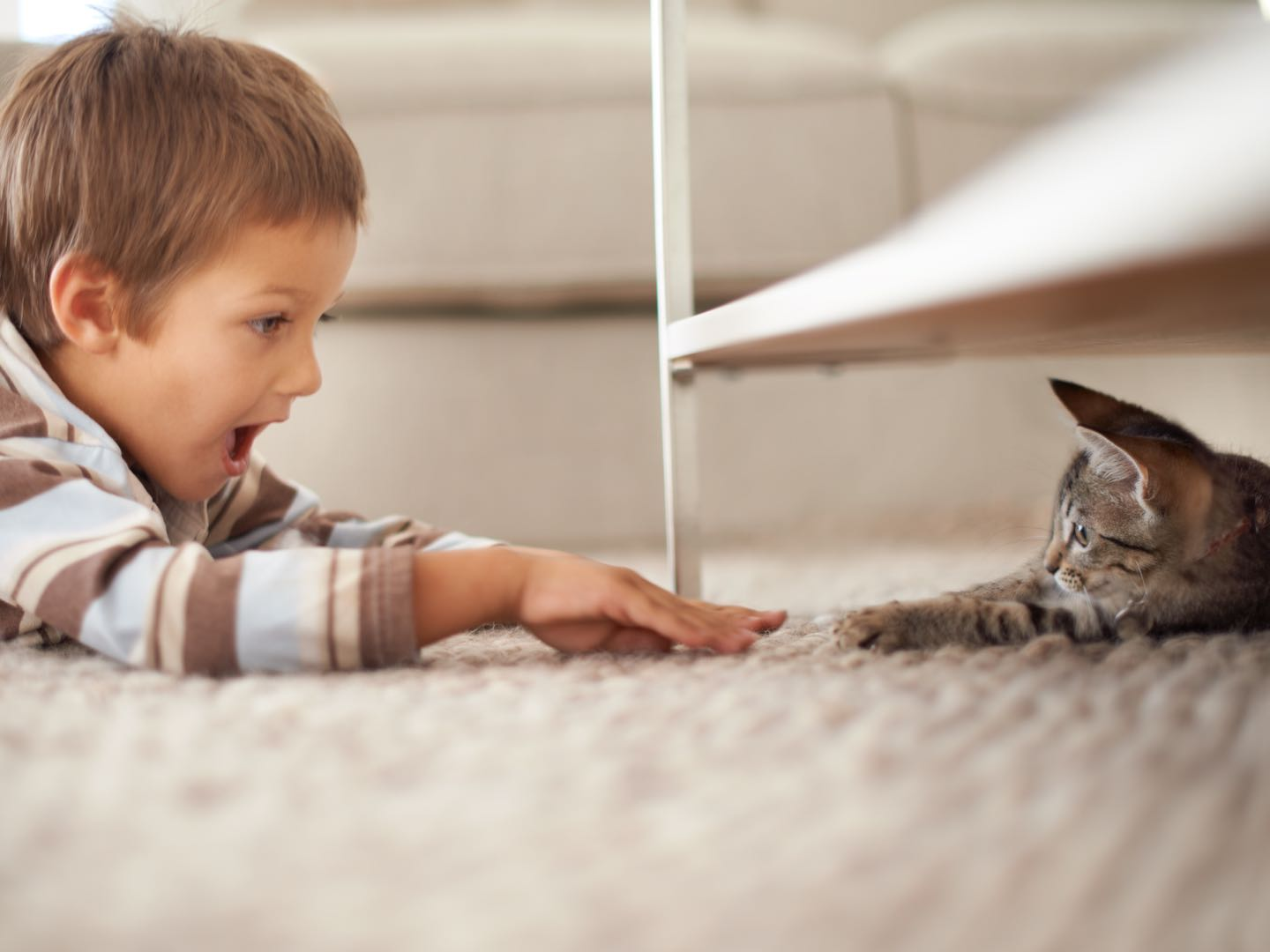 The importance of regular carpet cleaning with pets